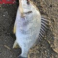 グッジョブさんの鹿児島県曽於郡での釣果写真