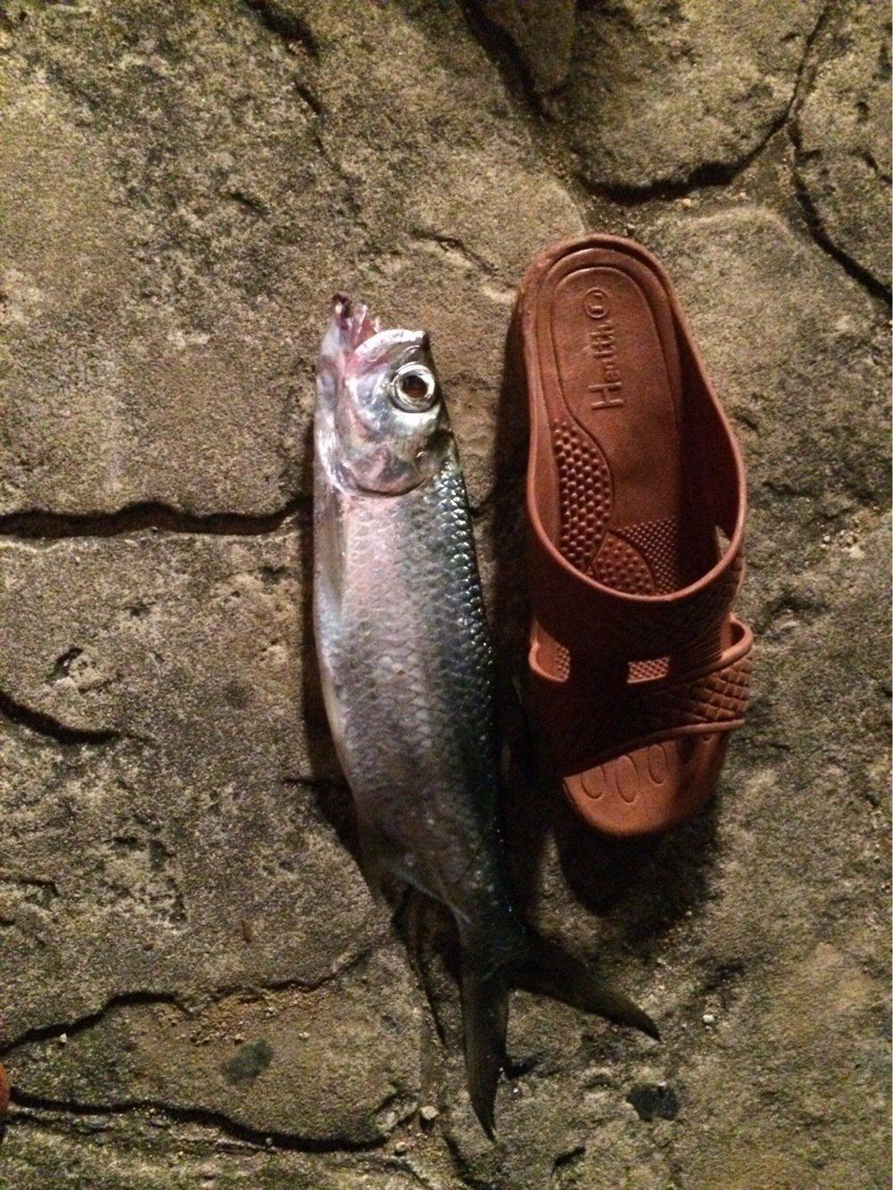 仲村さんの投稿画像,写っている魚は
