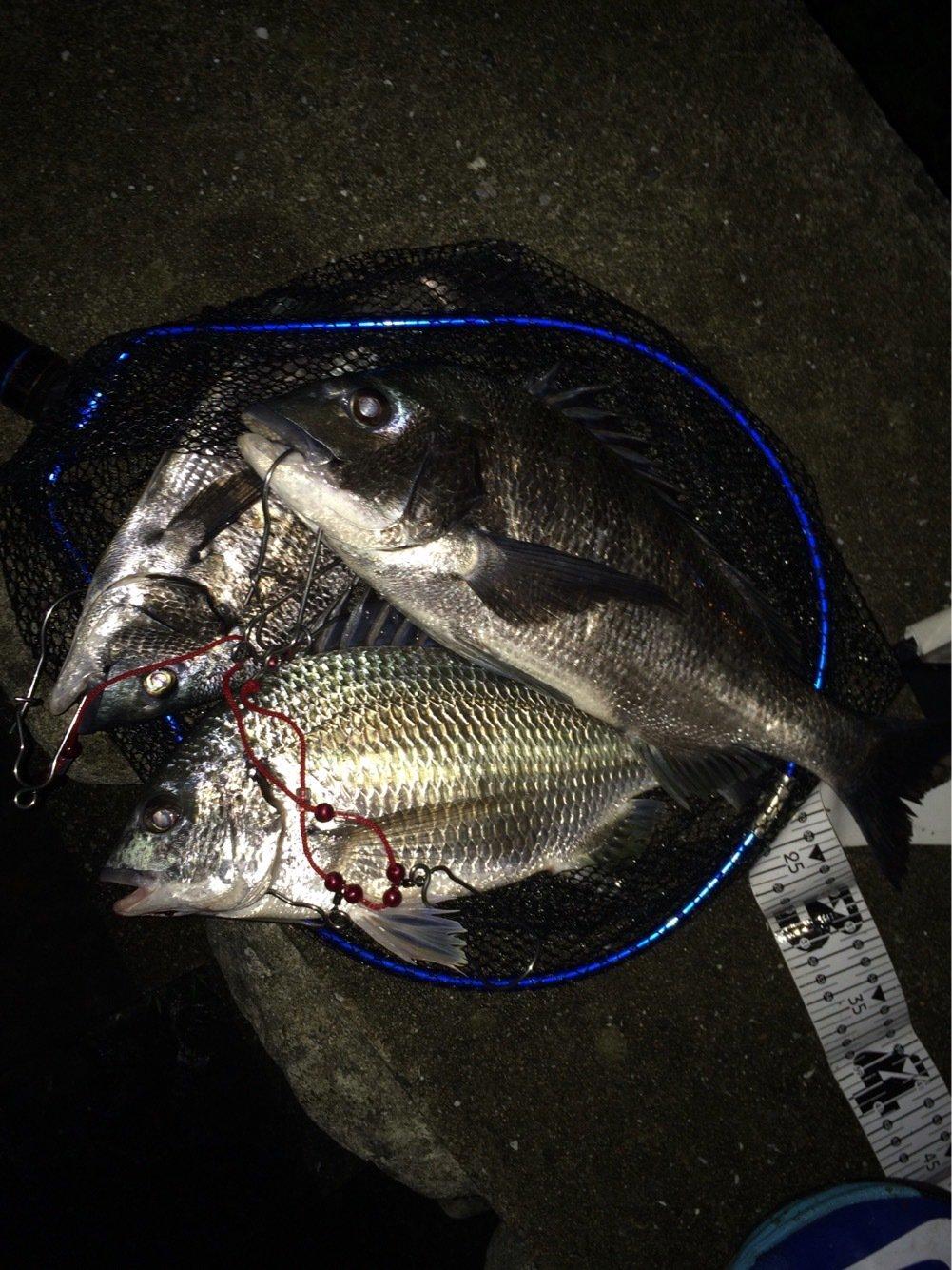 シーバスハンターさんの投稿画像,写っている魚はキチヌ