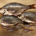 chisataさんのウミタナゴの釣果写真