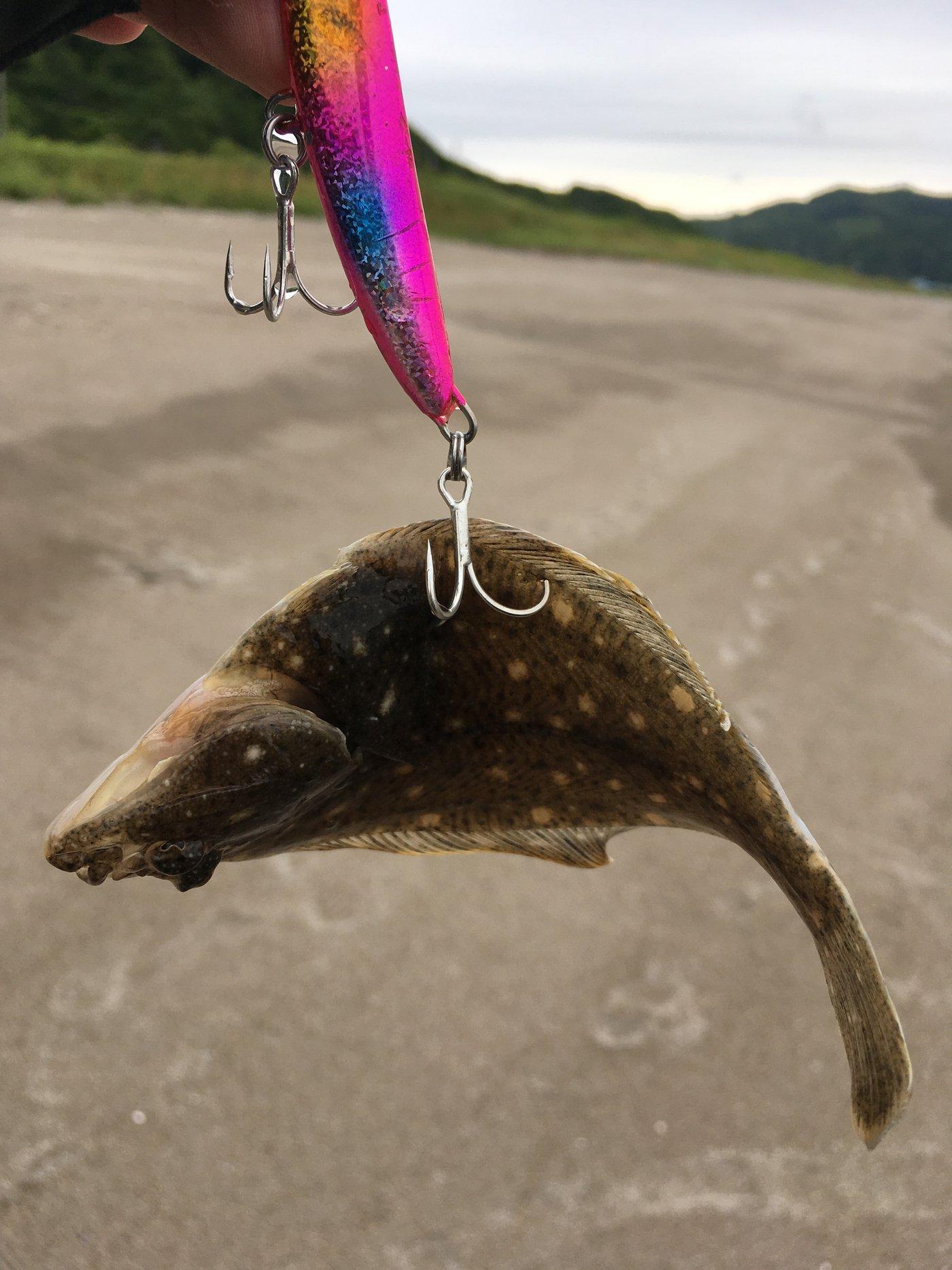 かざねーるさんの投稿画像,写っている魚は,