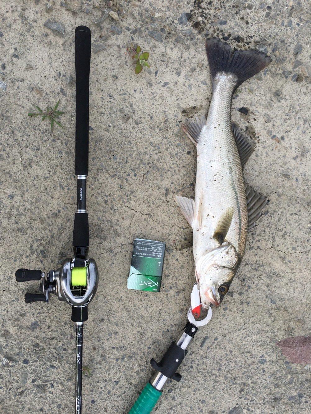 泡姫ちゃんさんの投稿画像,写っている魚はスズキ