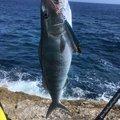 ふーみんさんの鹿児島県大島郡での釣果写真