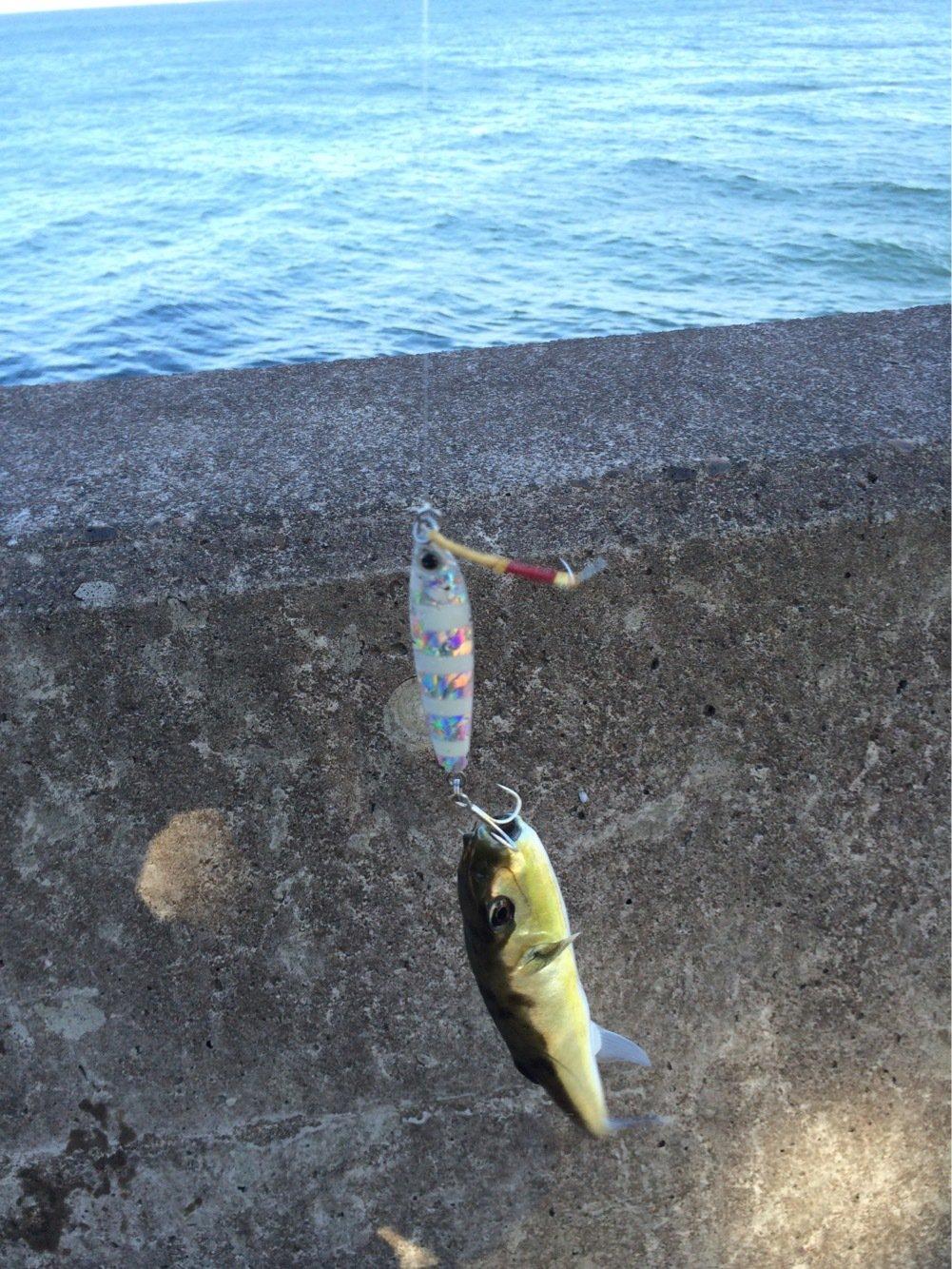 keiさんの投稿画像,写っている魚はフグ