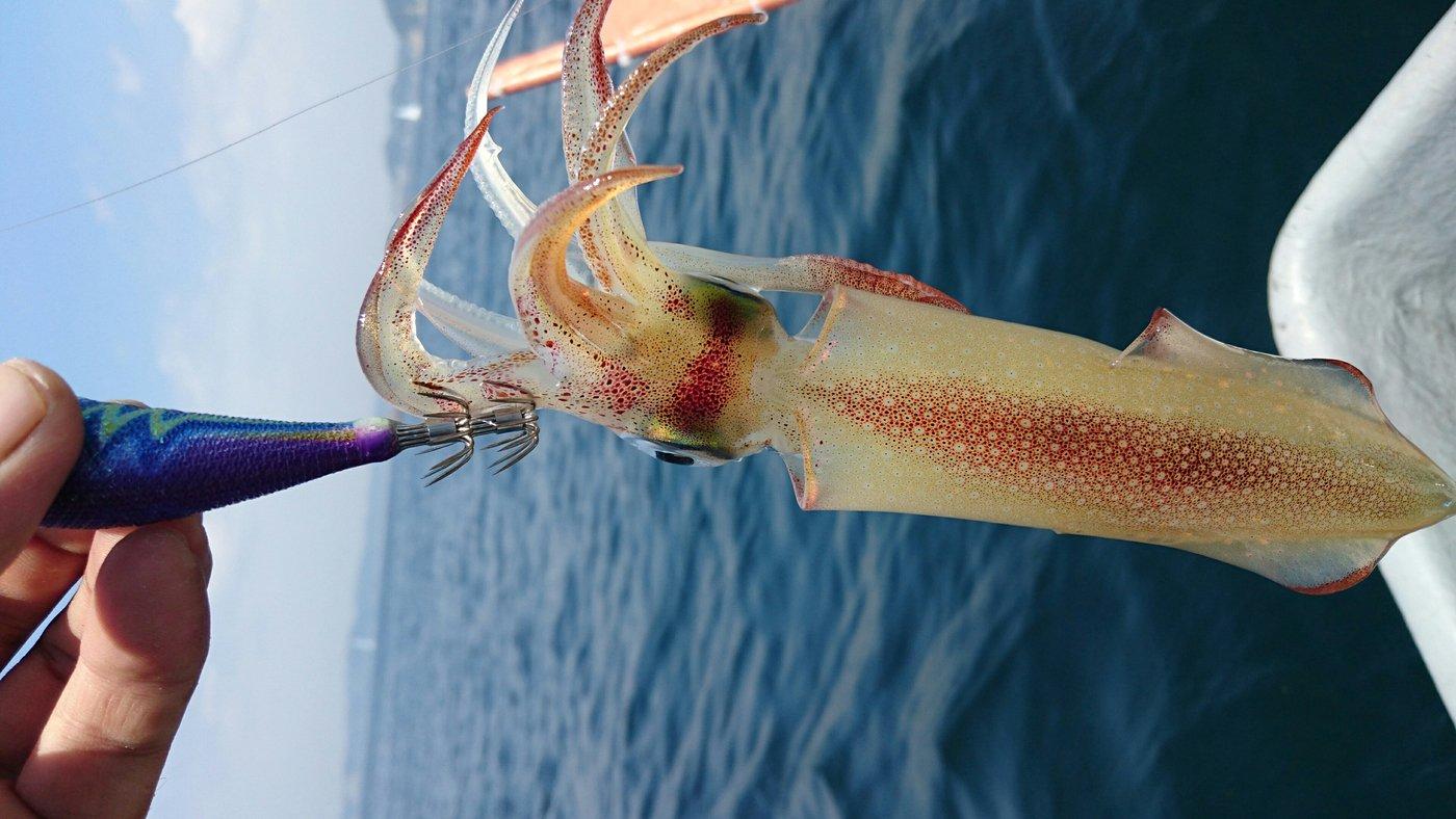 三宿のたこ焼屋さんの投稿画像,写っている魚はジンドウイカ