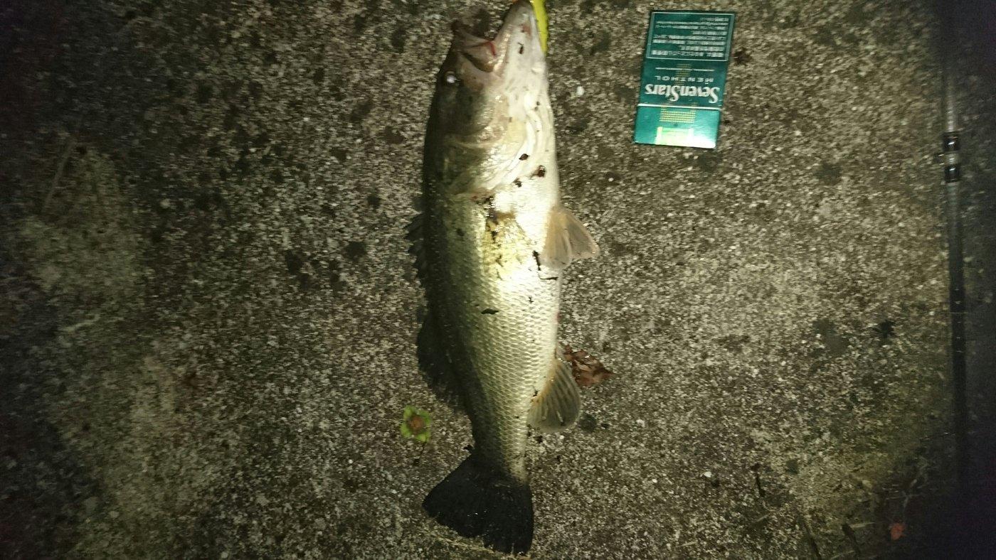 まさやさんの投稿画像,写っている魚はブラックバス