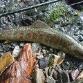 MAさんの和歌山県伊都郡での釣果写真
