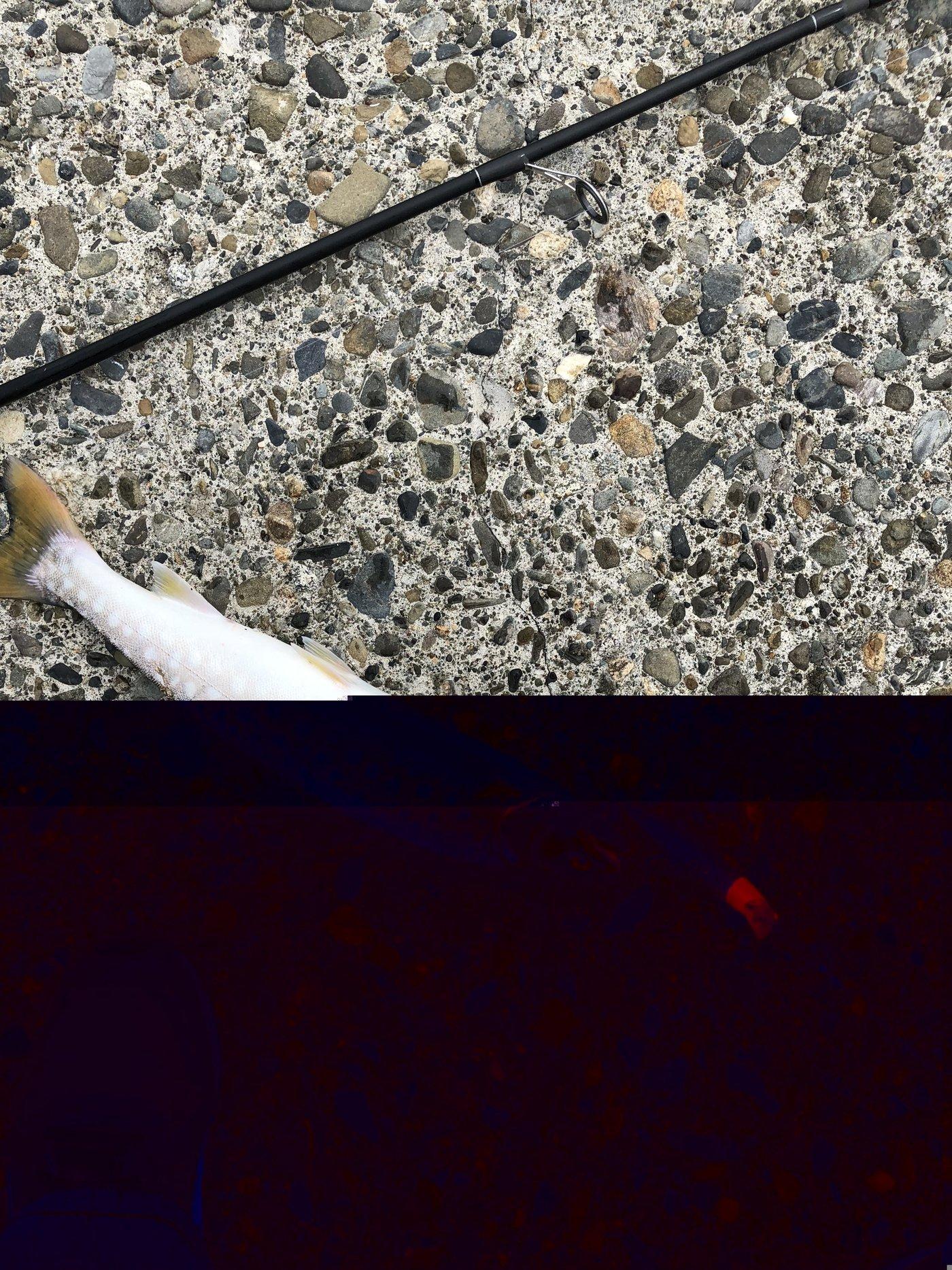 かずさんの投稿画像,写っている魚はアメマス