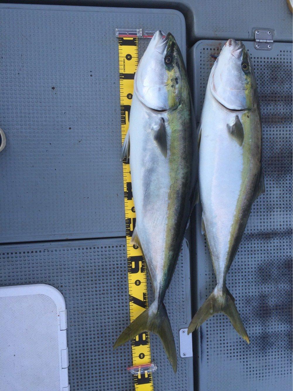 ヒデポンさんの投稿画像,写っている魚はブリ