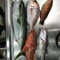 まさひろさんの茨城県鹿嶋市でのワラサの釣果写真