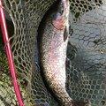 てつおTVさんの山梨県北都留郡での釣果写真