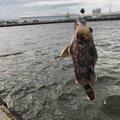 k.kobayasiさんの三重県四日市市でのカサゴの釣果写真