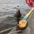 k.kobayasiさんの三重県四日市市でのメバルの釣果写真