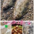 ackyさんの静岡県湖西市でのマサバの釣果写真
