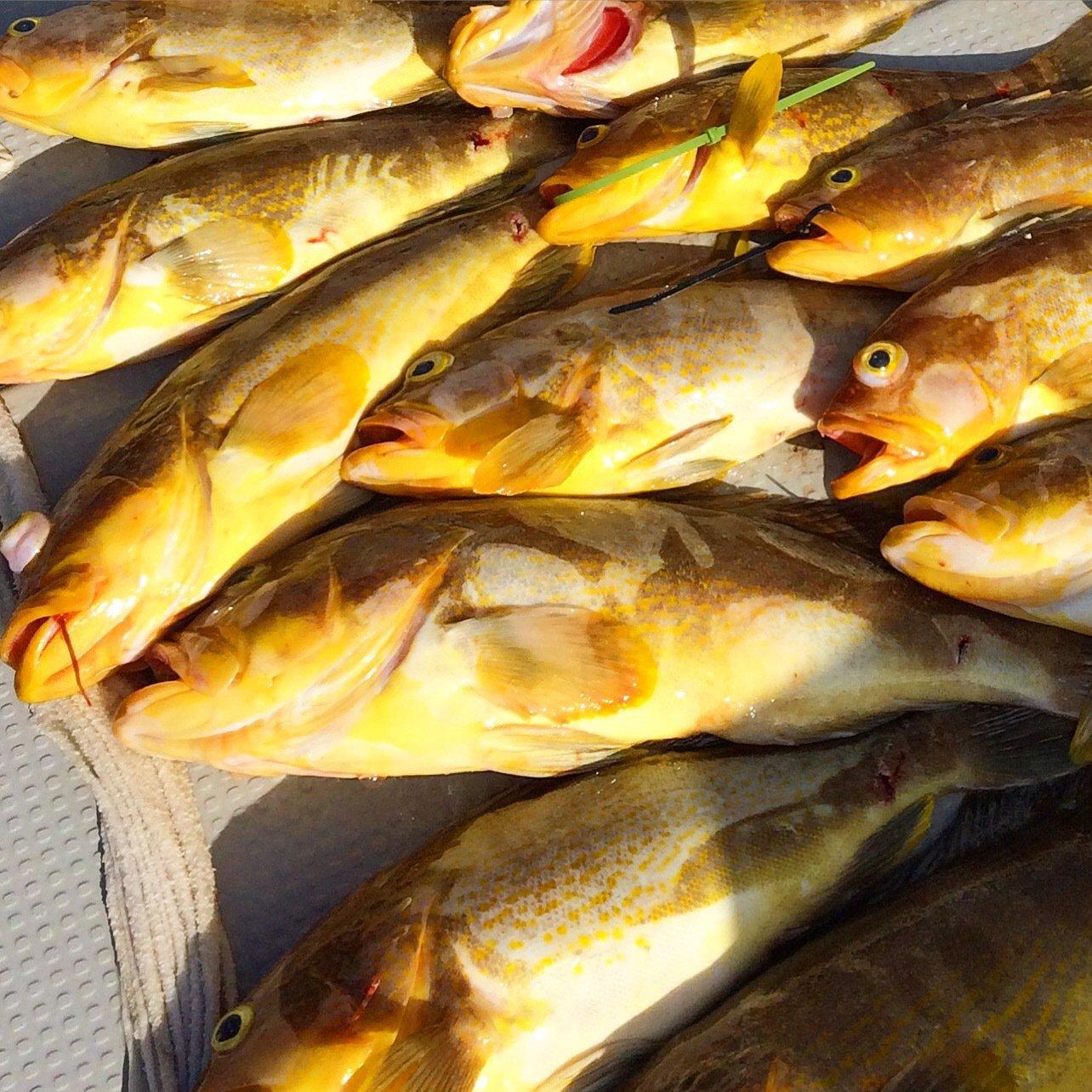 根太郎さんの投稿画像,写っている魚はアオハタ