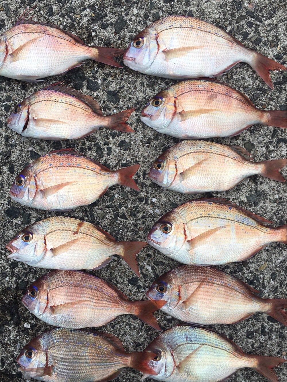 たかちゃんさんの投稿画像,写っている魚はマダイ