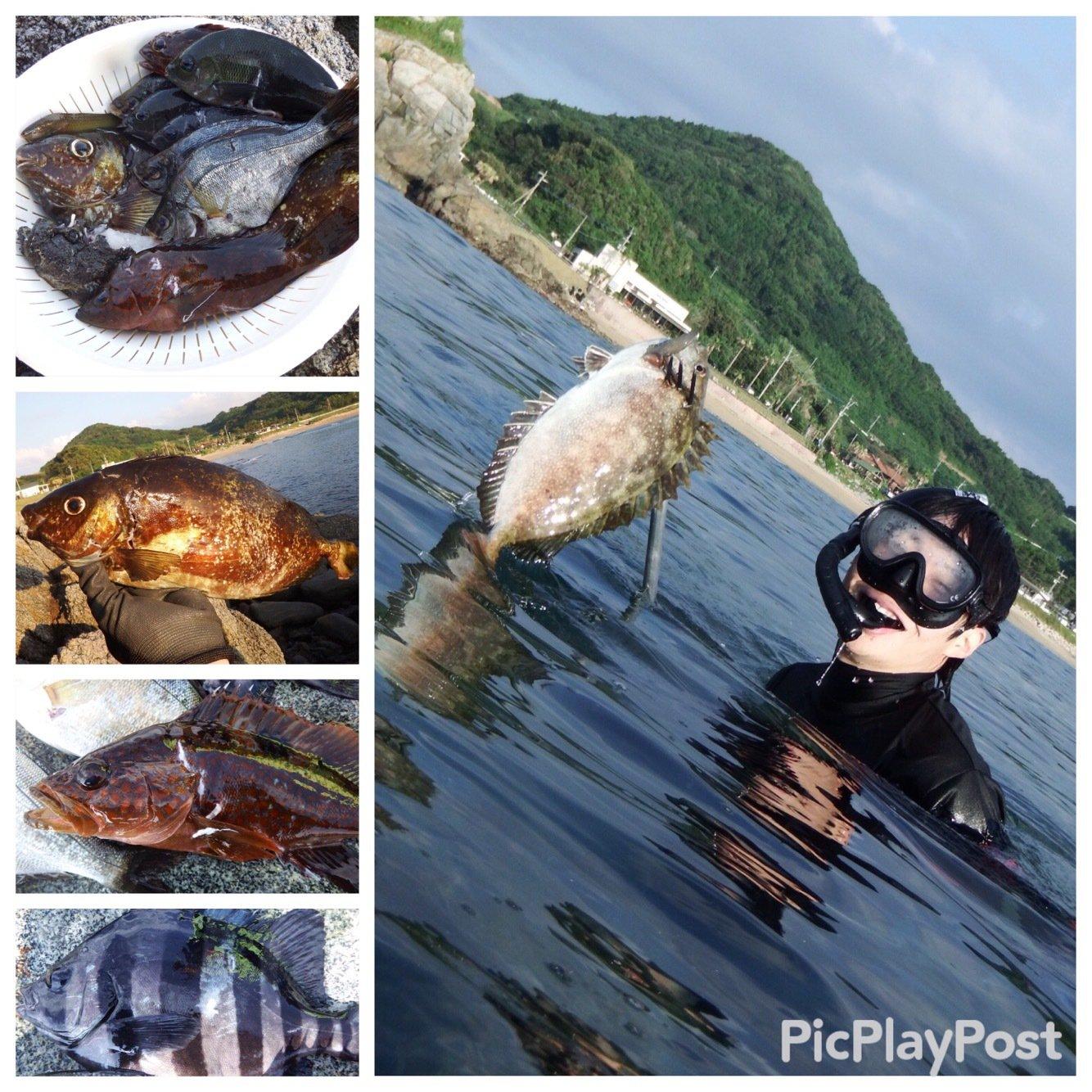 たくさんの投稿画像,写っている魚はアイゴ