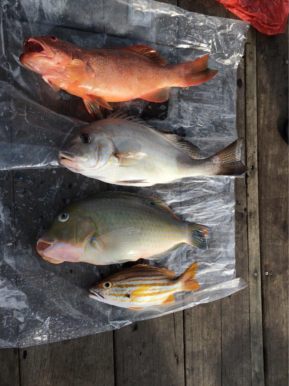IT Singaporeさんの投稿画像,写っている魚は