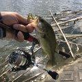 マサマサ🐡さんの千葉県夷隅郡での釣果写真