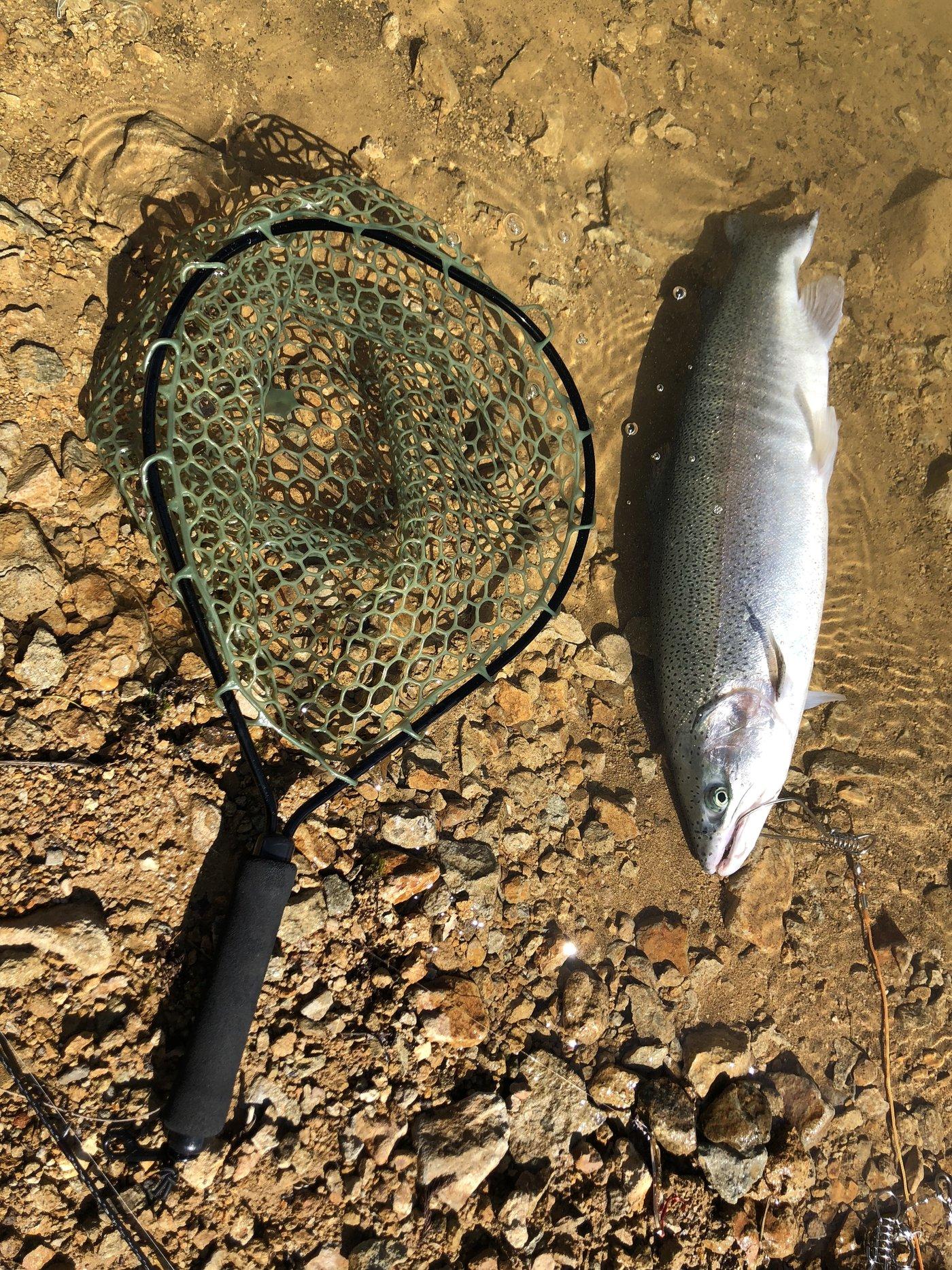 レオさんの投稿画像,写っている魚はニジマス