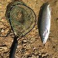 レオさんの長野県下高井郡での釣果写真