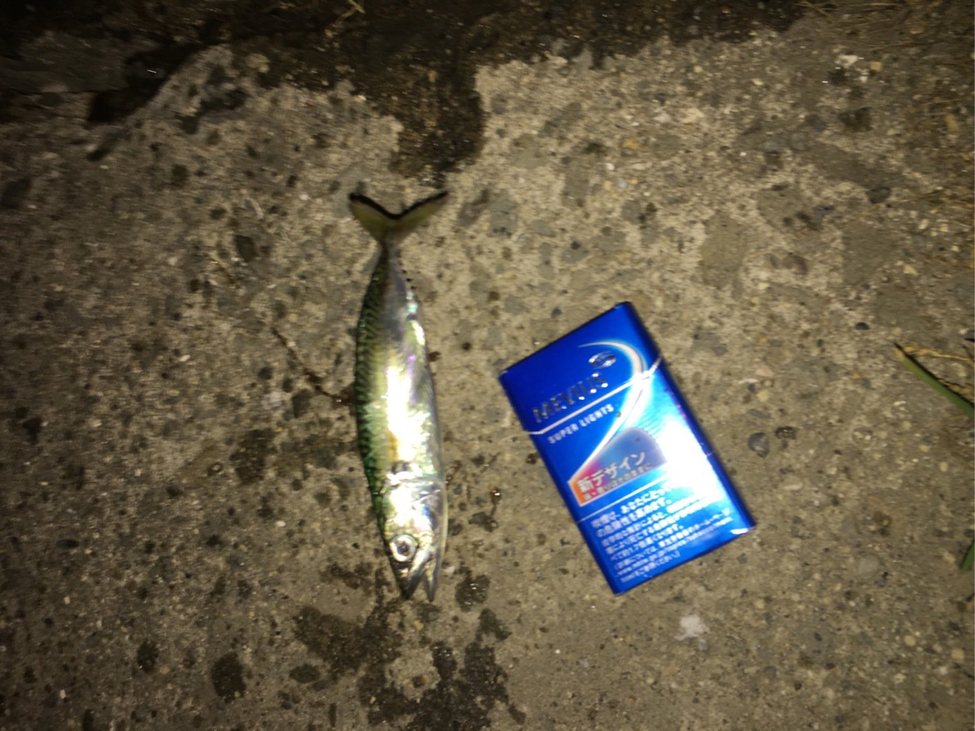 進次郎さんの投稿画像,写っている魚はゴマサバ