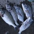Zu-shimi さんの静岡県藤枝市での釣果写真