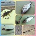 さよ*ˊᵕˋ)੭さんの千葉県浦安市でのクロダイの釣果写真