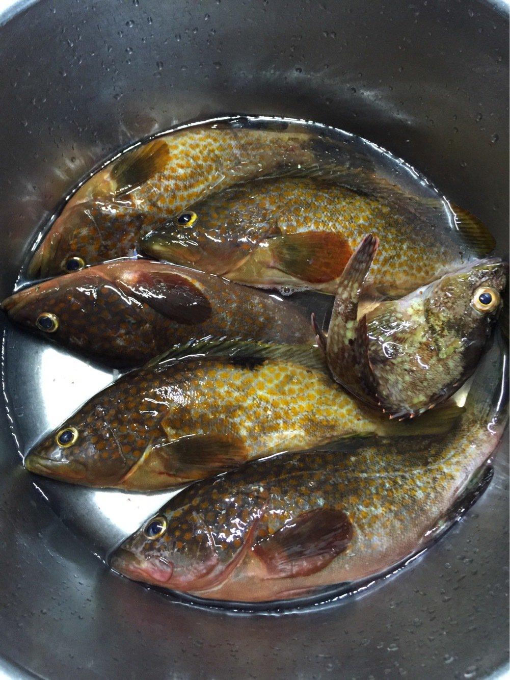 KGさんの投稿画像,写っている魚はキジハタ