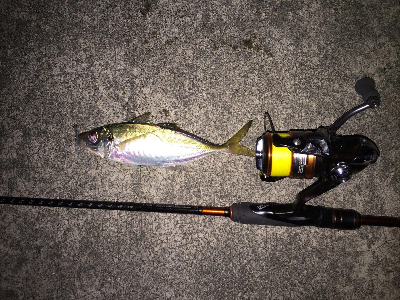 もっちさんの投稿画像,写っている魚はアジ