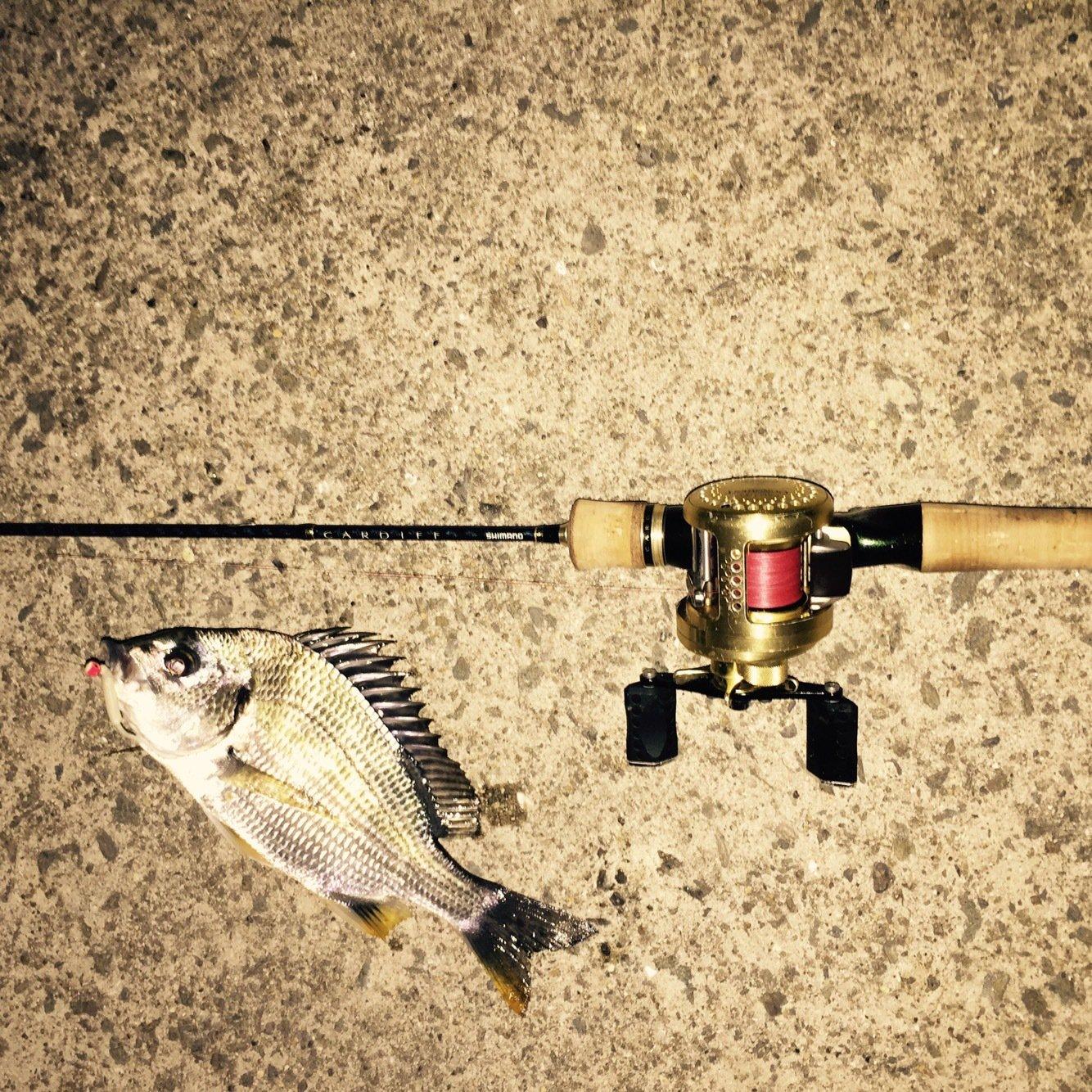 にたやさんの投稿画像,写っている魚はキチヌ