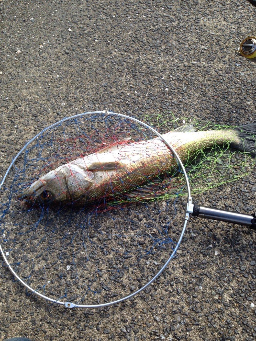 あんこうさんの投稿画像,写っている魚はスズキ