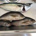 riさんの鹿児島県肝属郡での釣果写真