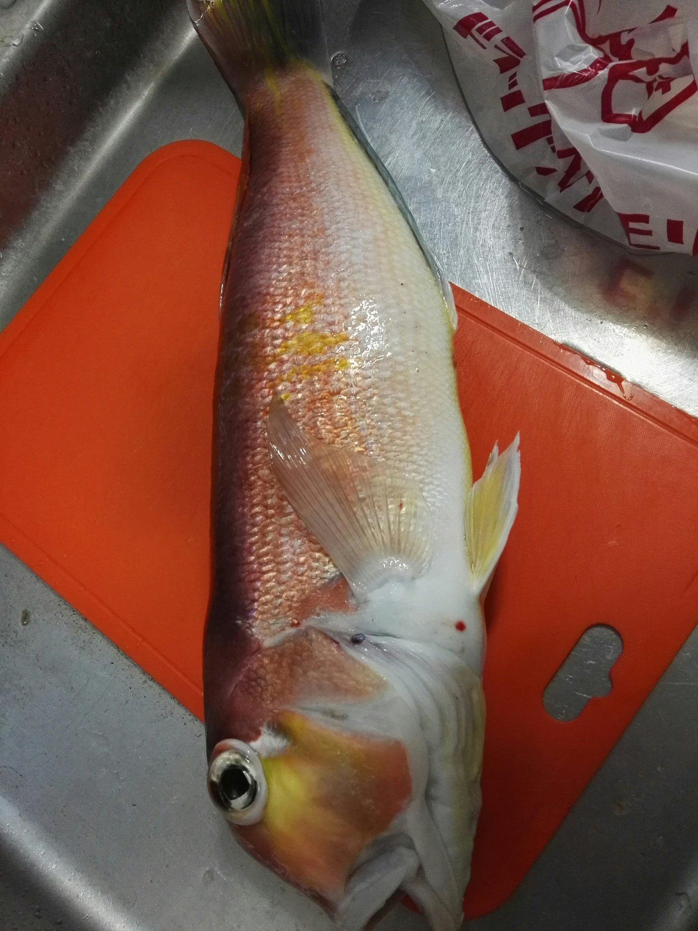 たひらさんの投稿画像,写っている魚はアマダイ