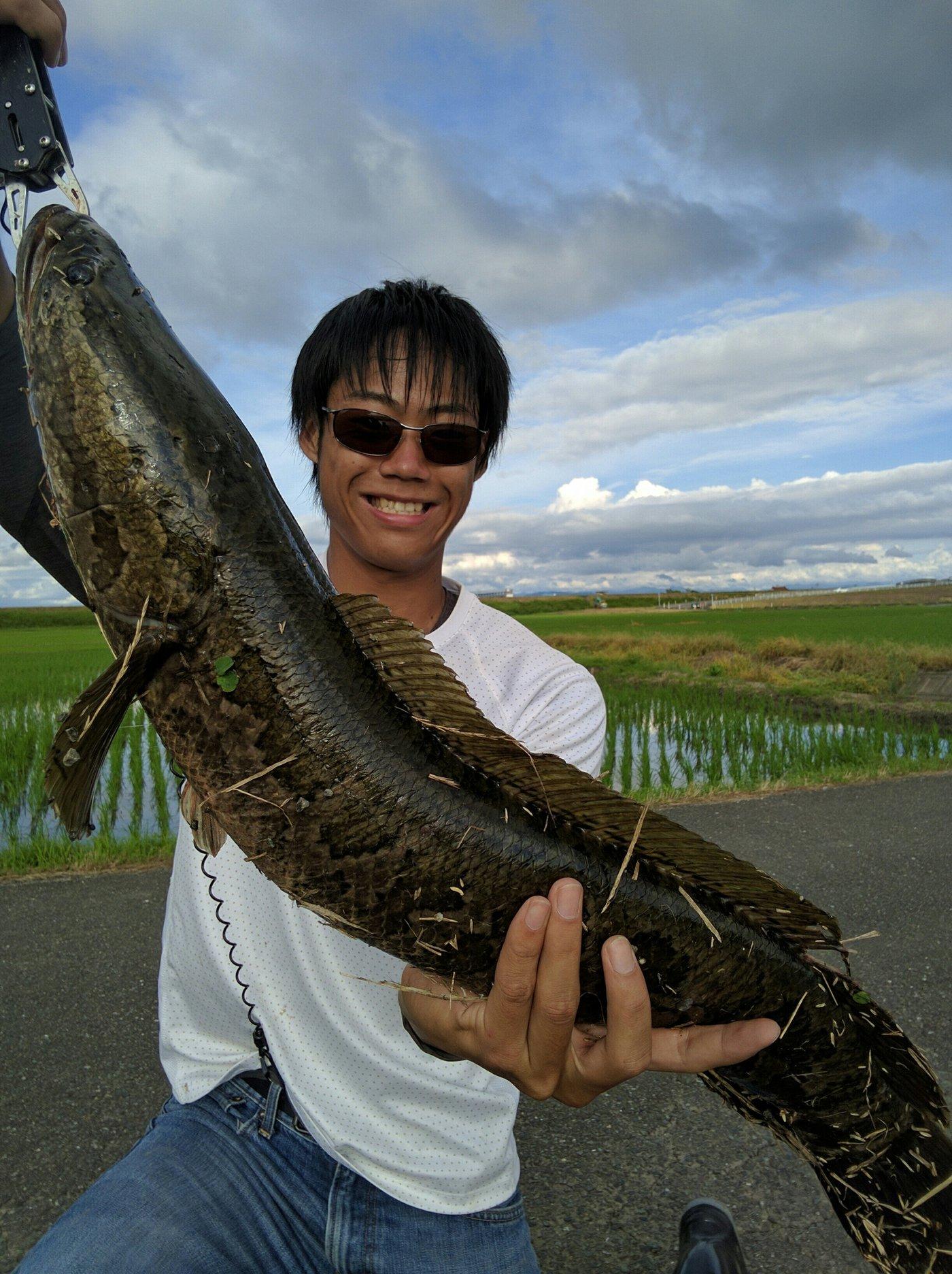 おろてぃさんの投稿画像,写っている魚はライギョ