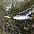 ヒロさんの奈良県宇陀郡での釣果写真
