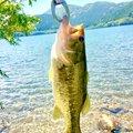 もりやさんの神奈川県足柄下郡での釣果写真