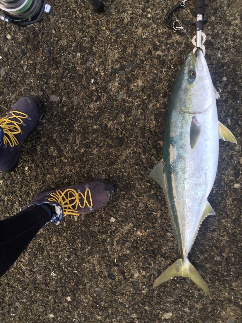 ロベルト カルロセさんの投稿画像,写っている魚はブリ