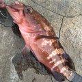 らいとさんの鳥取県東伯郡での釣果写真