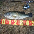 Chubby Takaさんの愛知県弥富市での釣果写真