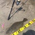 Bobskiさんの千葉県長生郡での釣果写真