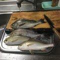 シロウさんの佐賀県多久市での釣果写真
