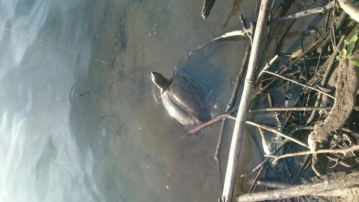 デッドプールさんの投稿画像,写っている魚は