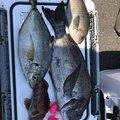 さとーるさんの大分県佐伯市でのクロダイの釣果写真