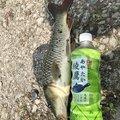 かずさんの福岡県大川市での釣果写真