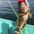 あっき@ひえおひろさんの北海道二海郡での釣果写真