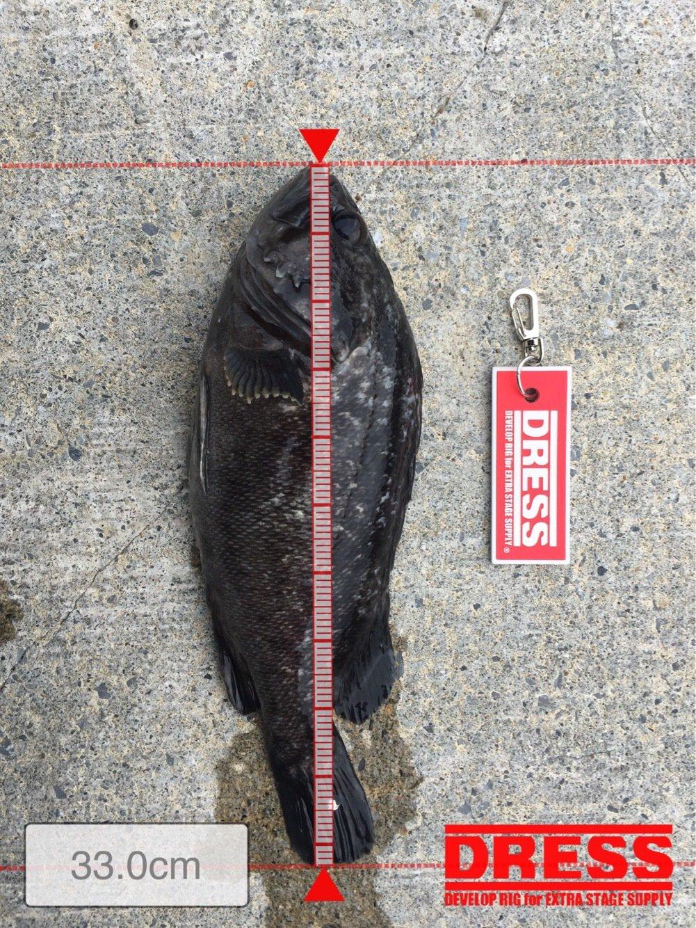 こかぶんさんの投稿画像,写っている魚はクロソイ