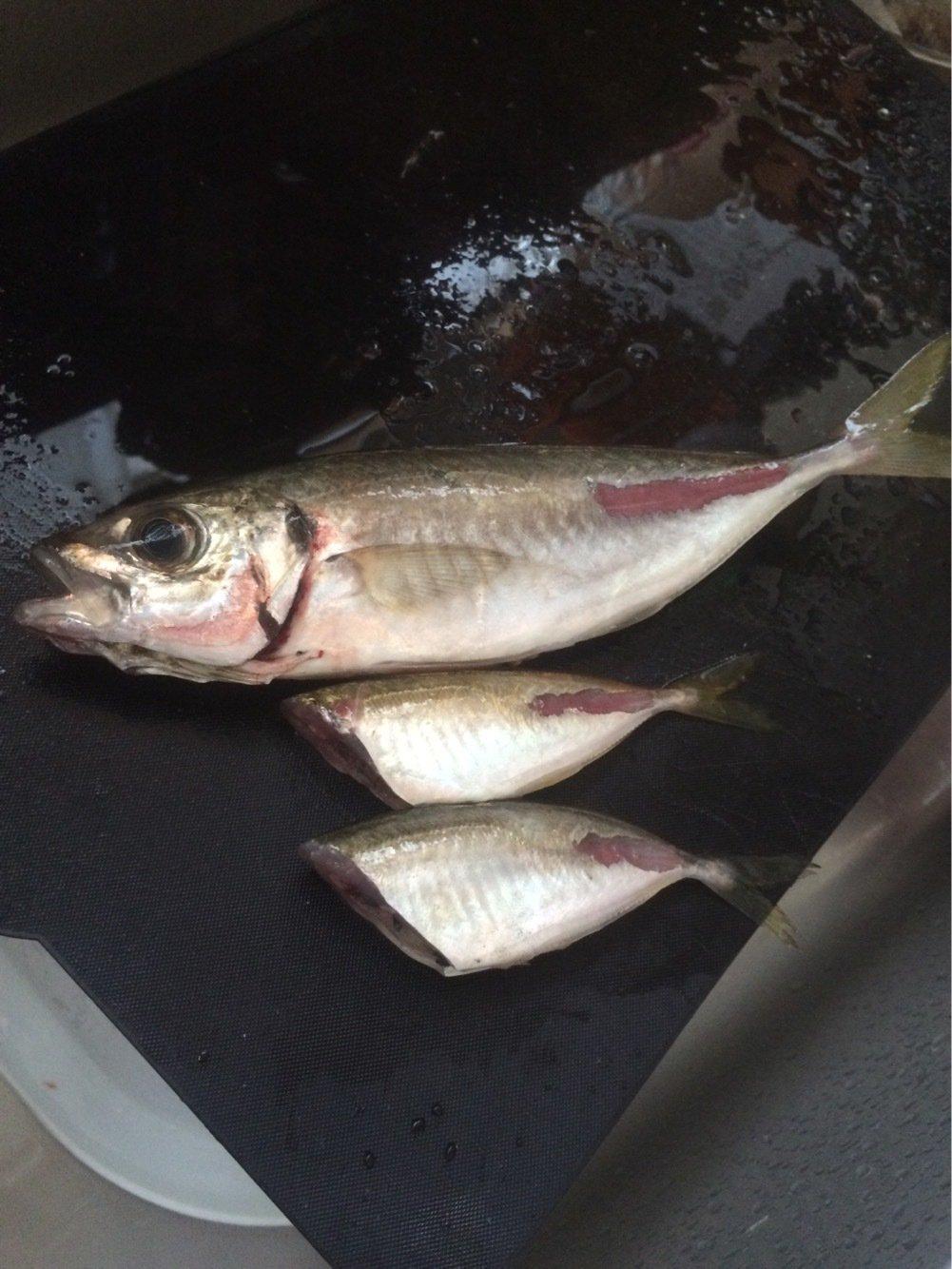 BeBeさんの投稿画像,写っている魚はアジ