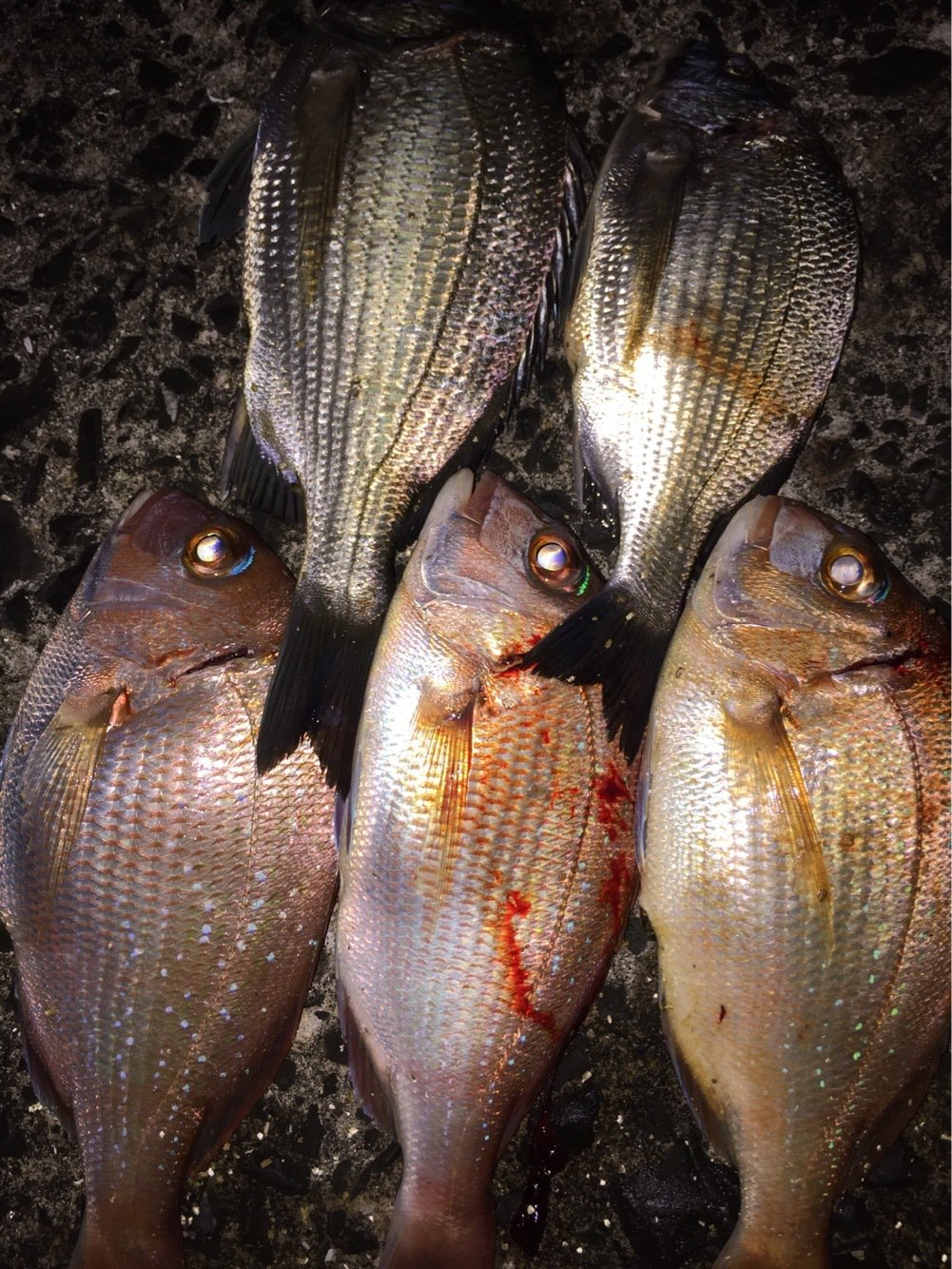 ヨッシーK2さんの投稿画像,写っている魚はマダイ