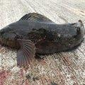 釣り之さんの北海道山越郡での釣果写真